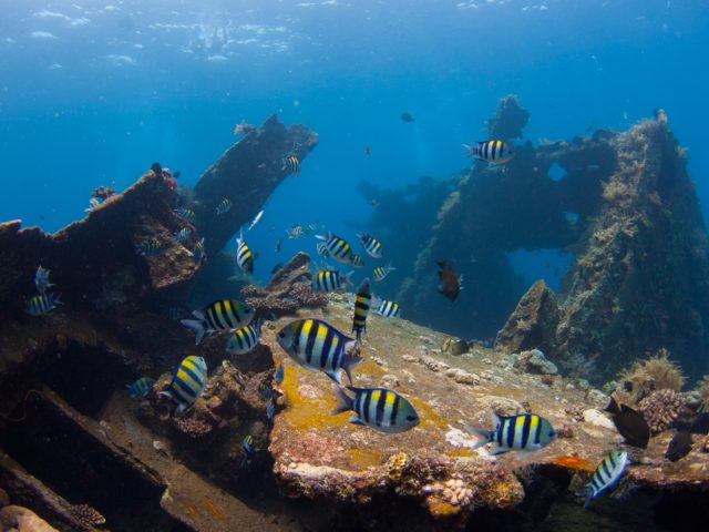 diving_in_tulamben_bali-photo-credit-tochristian-loader