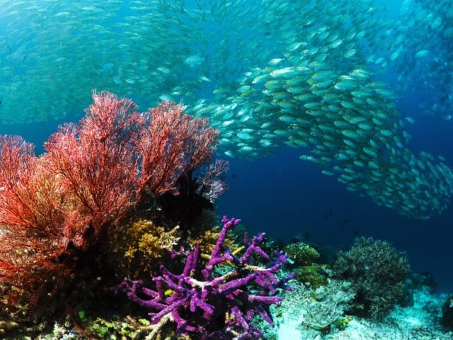 scuba-diving-at-sardine-reef1